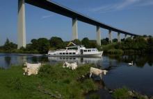 Schiff (Friedrich Freye) der Weißen Flotte im Ruhrtal unterhalb der Ruhrtalbrücke mit Kühen im Vordergrund.