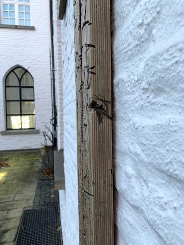 Schmitz-Schmelzer, Harald: Hommage an Otto Pankok, Detail: Sritenansicht des Mittelteils; Foto: Kunstmuseum Mülheim an der Ruhr 2019.